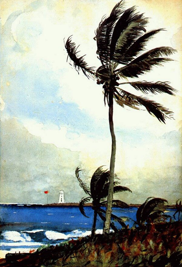 Palm Tree Nassau - by Winslow Homer